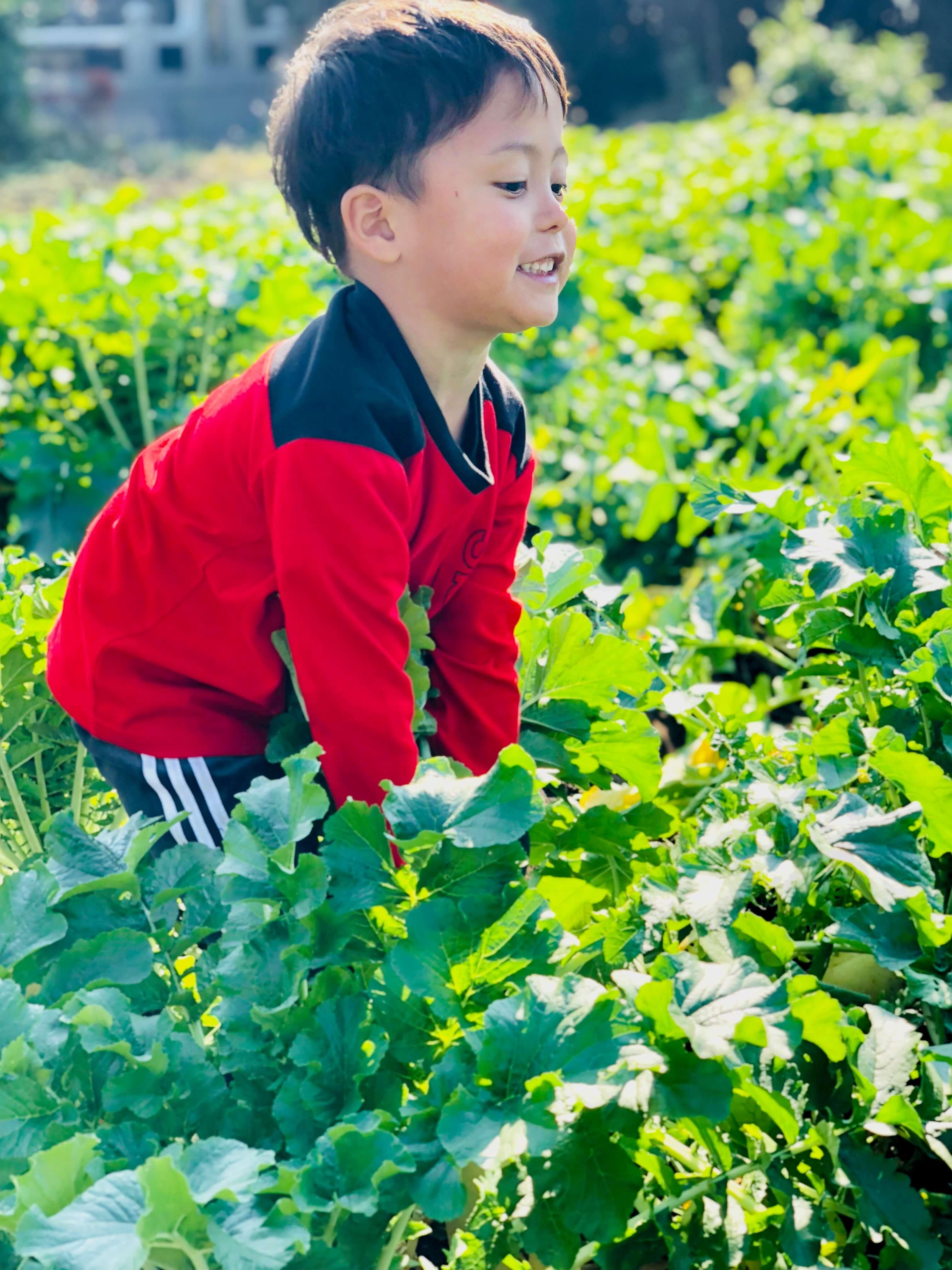 畑 4歳 大根 収穫
